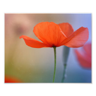 Miss Poppy Photographic Print