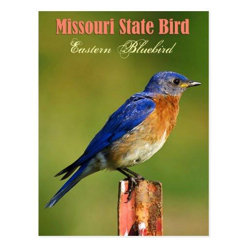 Missouri State Bird Eastern Bluebird Postcard Zazzle
