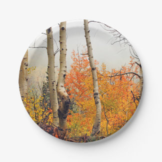 Misty Autumn Aspen Paper Plate