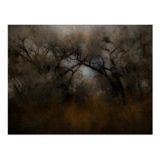 Misty Cottonwoods Postcard