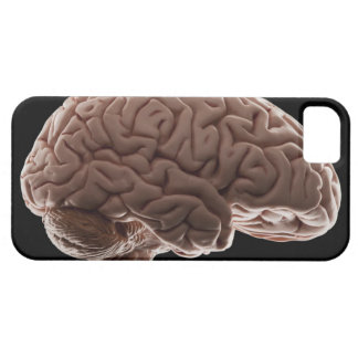 Model of human brain, studio shot barely there iPhone 5 case