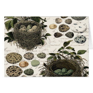 Modern Vintage French bird nests and eggs Note Card