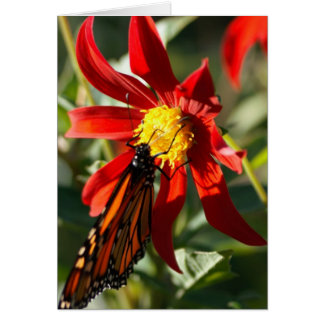 Monarch 2 card