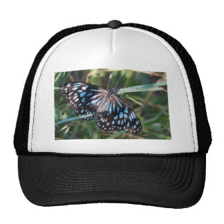 MONARCH BUTTERFLY BLUE RURAL QUEENSLAND AUSTRALIA CAP