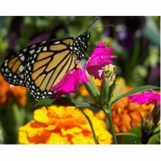 Monarch butterfly on pink marigold-photo sculpture standing photo sculpture