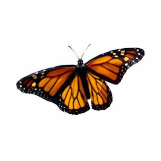 Monarch Butterfly Sculpture Acrylic Cut Out