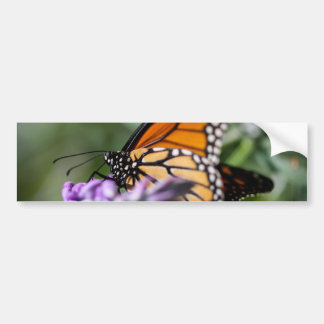 Monarch Danaus Plexippus Bumper Sticker