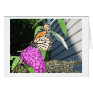 monarch on butterfly bush note card