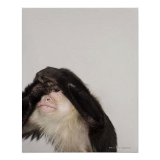 Monkey covering its eyes poster