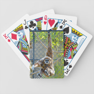 Monkey in zoo habitat bicycle playing cards