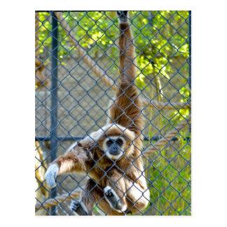 Monkey in zoo habitat postcard