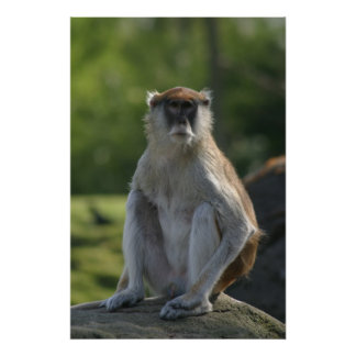 Monkey! Posters
