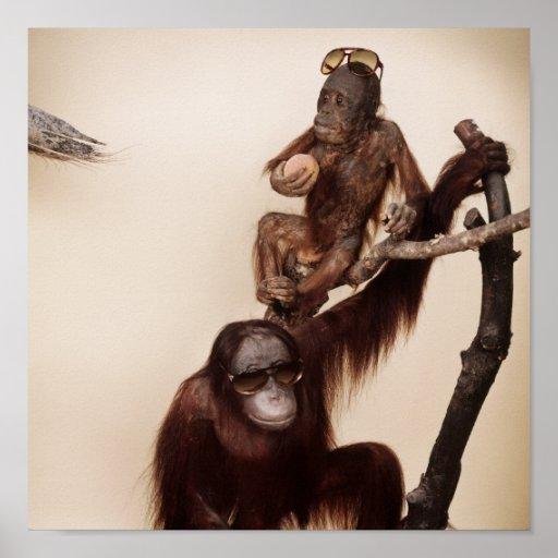 Monkeys in a tree posters