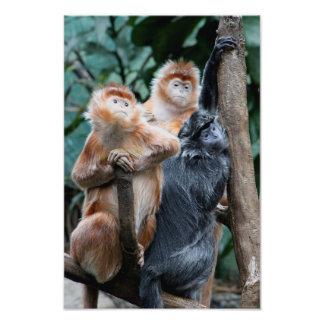 Monkeys Photo Print