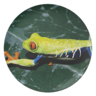 Monte Verde, Costa Rica. Red-eyed tree frog Plate