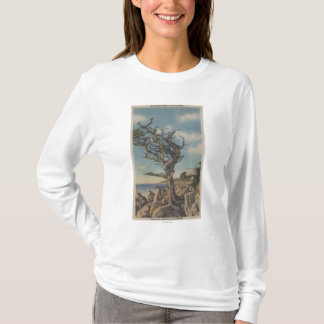 Monterey, CA - Old Witch Tree on 17 Mile T-Shirt
