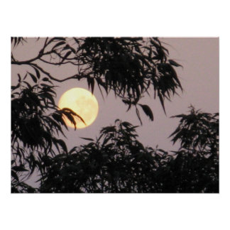 Moon behind gum trees poster