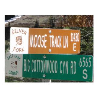 Moose Track Lane Postcard