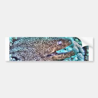 Moray Eel Bumper Sticker