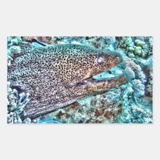 Moray Eel Rectangular Sticker