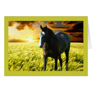 MORISCO AT SUNSET CARD