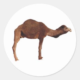 Moroccan Camel Sticker