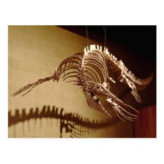 Mosasaur - Sea Lizard Post Card