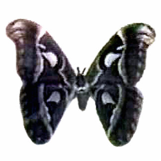 Moth Black Magnet The MUSEUM Zazzle Gifts Cut Outs