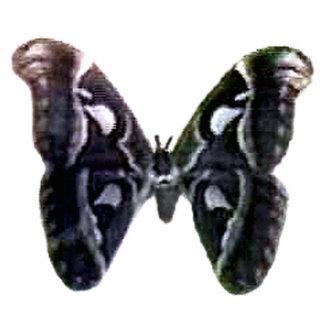 Moth Black Magnet The MUSEUM Zazzle Gifts Photo Sculpture Magnet