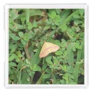 Moth, Perfume Tray. Acrylic Tray