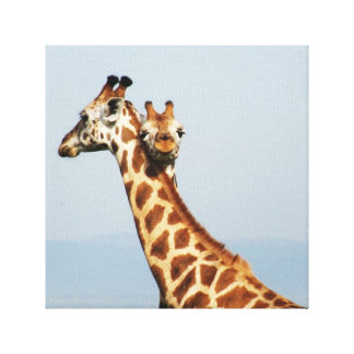 Mother and baby giraffe hugging canvas print