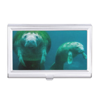 Mother manatee with her calf in Crystal River Business Card Holder