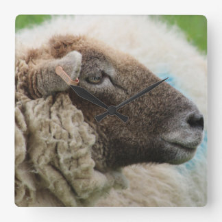 Mother Sheep Square Wall Clock