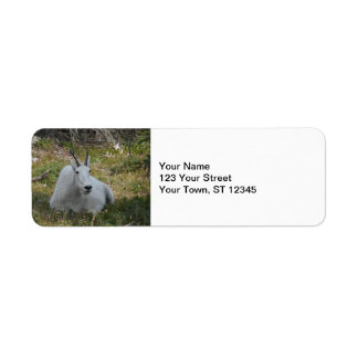 Mountain Goat- Glacier National Park