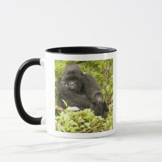 Mountain Gorilla, Gorilla beringei (formerly G. Mug