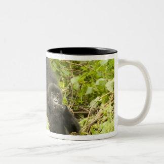 Mountain Gorilla, Gorilla beringei (formerly G. Two-Tone Coffee Mug