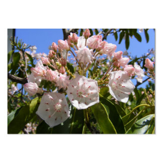 Mountain Laurel 46 ~ ATC card Pack Of Chubby Business Cards
