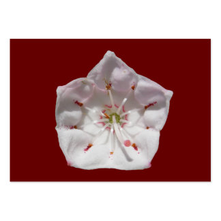 Mountain Laurel 48 ~ ATC card Pack Of Chubby Business Cards