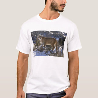Mountain Lion, aka puma, cougar; Puma concolor, T-Shirt