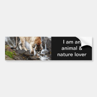 Mountain lion at the waterfall bumper sticker