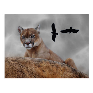 Mountain lions watch out postcard