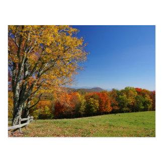 Mountain Meadow Postcard