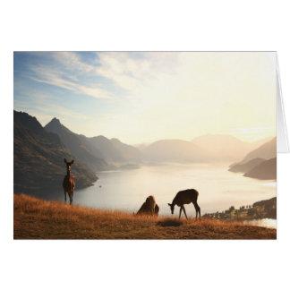 Mountain View 3 Card