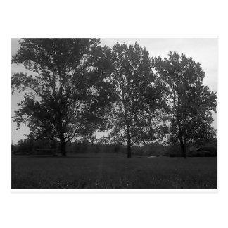 Mountview Park Triplets Postcard