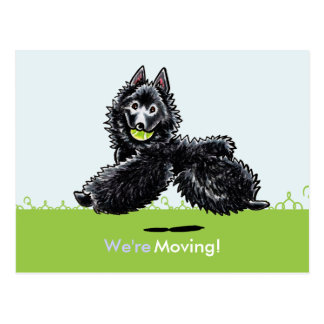 Moved Moving Schipperke New Address Announcements Postcard