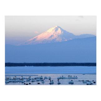 Mt. Shasta California Postcard