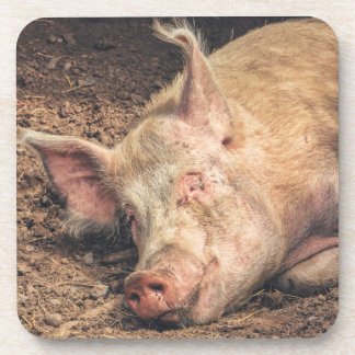 Mud Pig Beverage Coaster