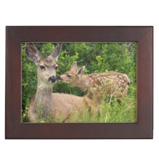Mule Deer Doe with Fawn 2 Keepsake Box