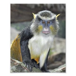 Multi- Colored Wolf Monkey Photo Print