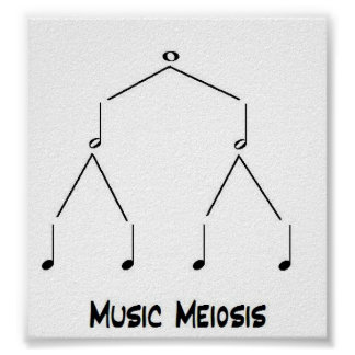 Music Meiosis Poster